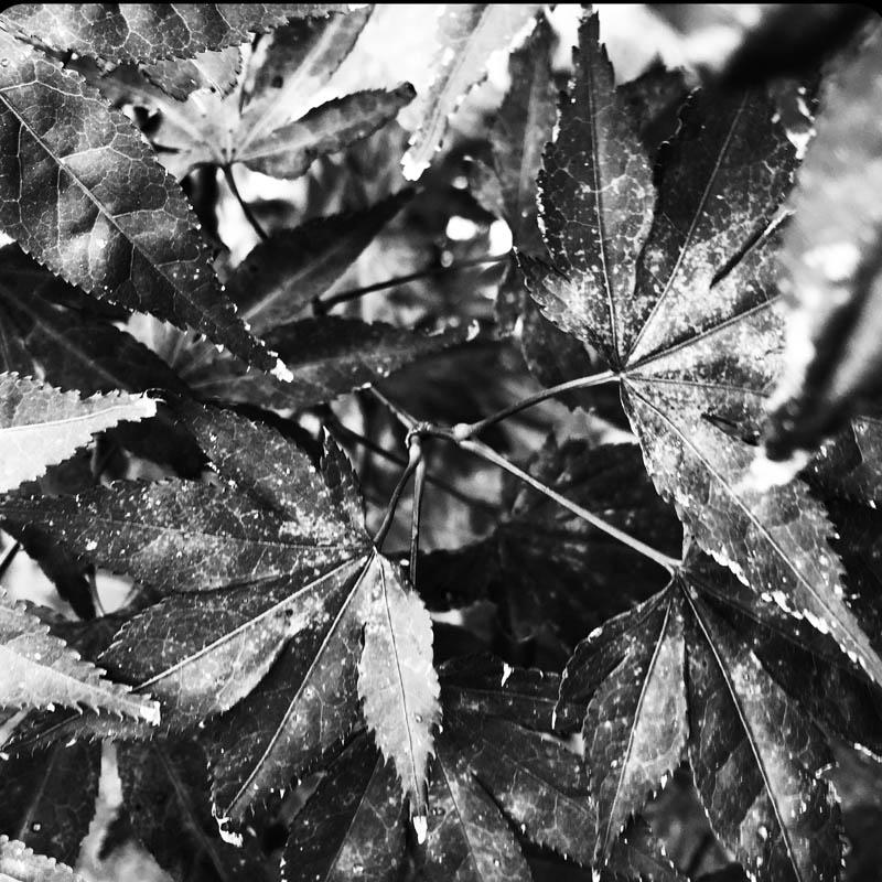 LaSirel_Sirella_Nature_Fine Art fotografie